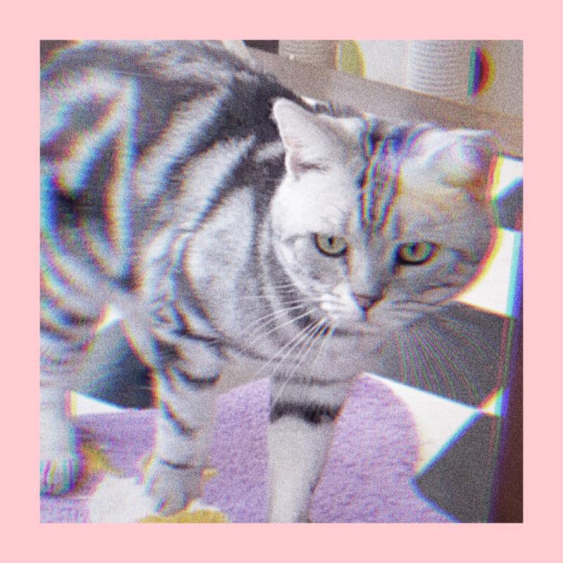 #3 家に年齢不詳の保護猫が来た!