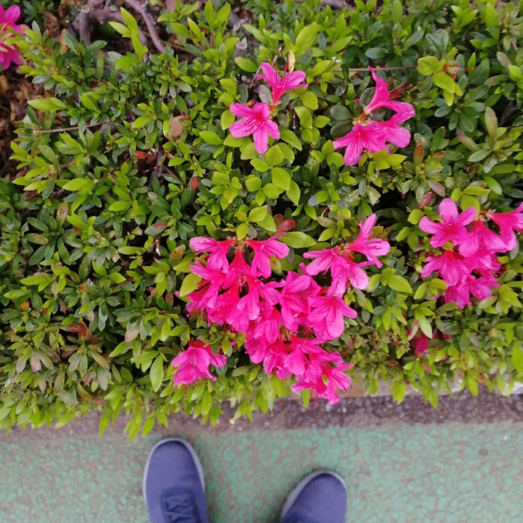 #094 久しぶりに花のはなし