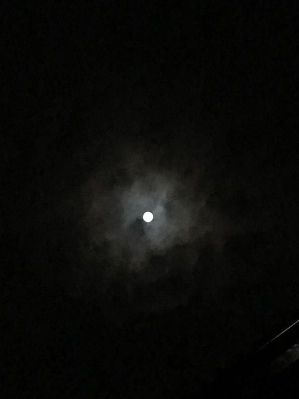 文学とお月見🎑