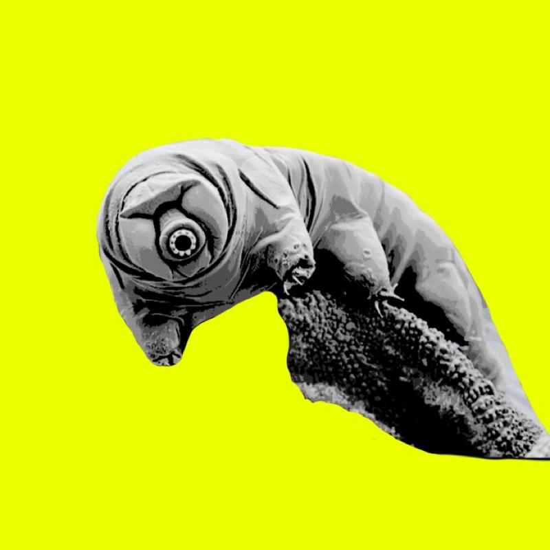 ♋️373:クマムシの超人的なDNAを人体にも入れよう