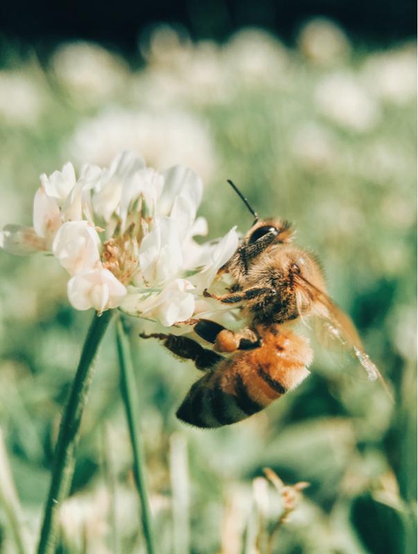 泣きっ面にハチ