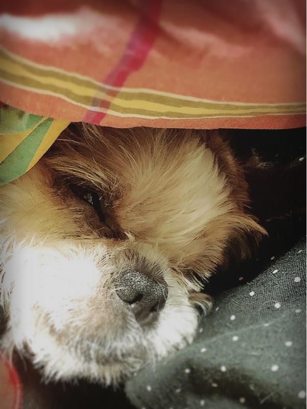 #愛犬への追悼