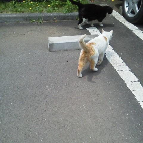 映画『レンタネコ』と、ご近所猫の話