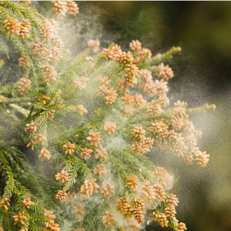 #142 花粉症とアレルギーと調味料