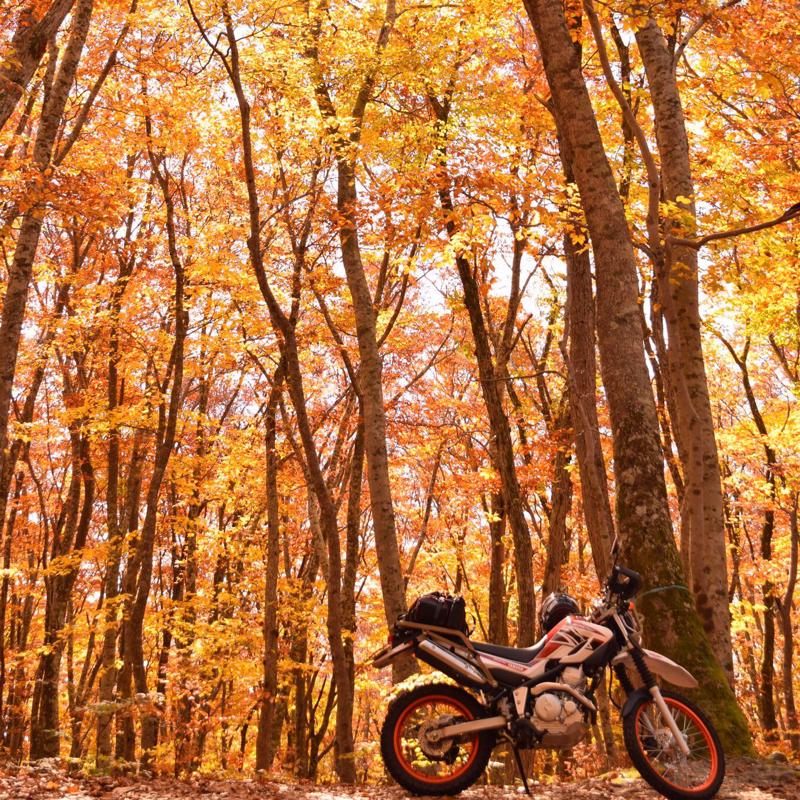 #353 go to からバイクの季節です