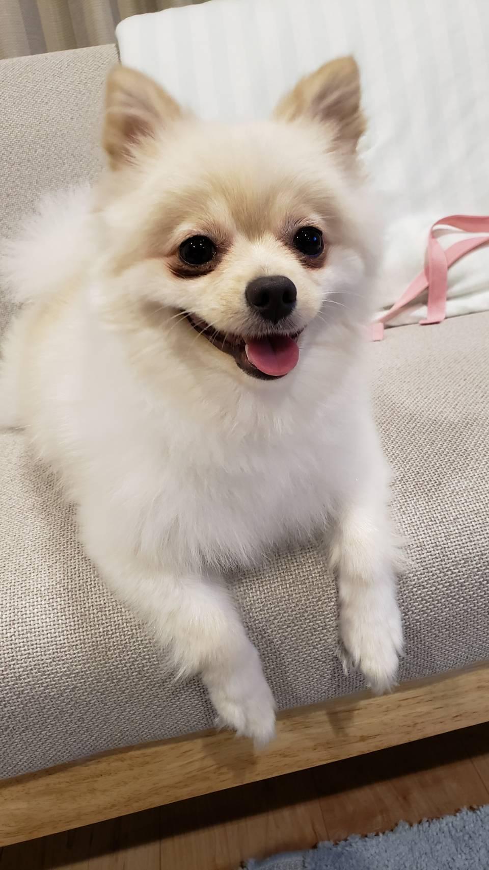 #6 犬嫌いの克服の仕方