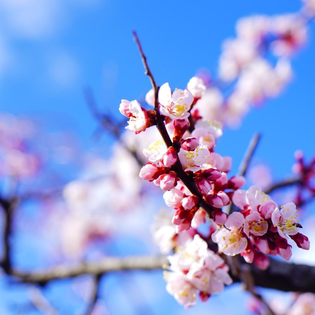 第91弾! 梅の花の香りを感じながら