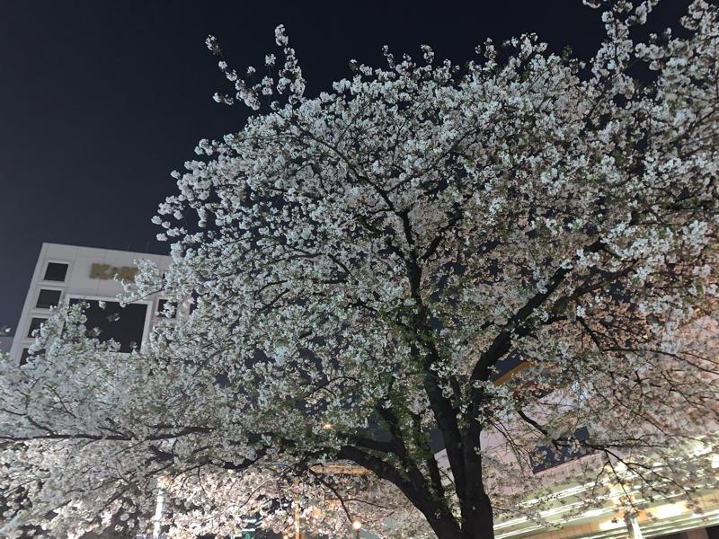 #15 マシュマロをありがとう!春の特別編