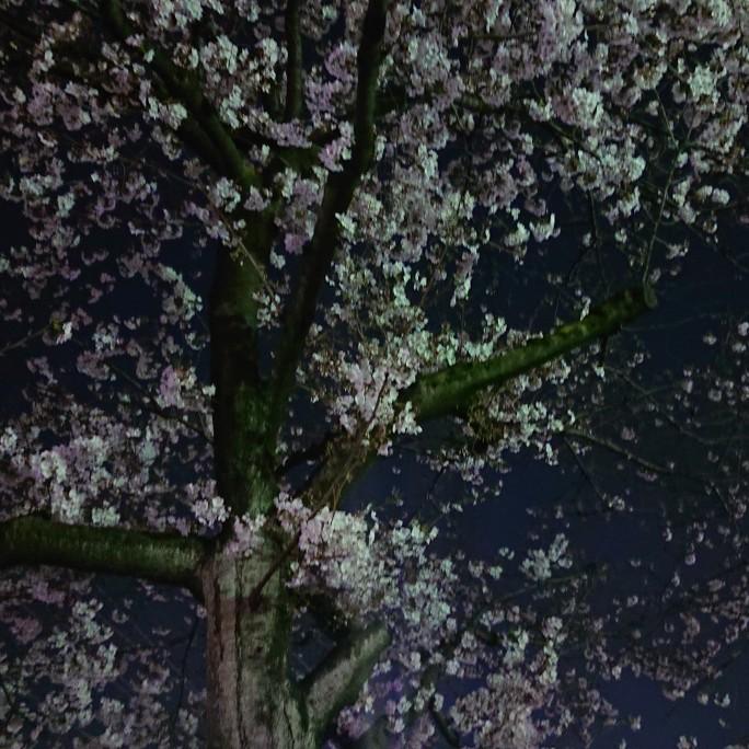 NO.10-1 コミックマーケットと桜の話