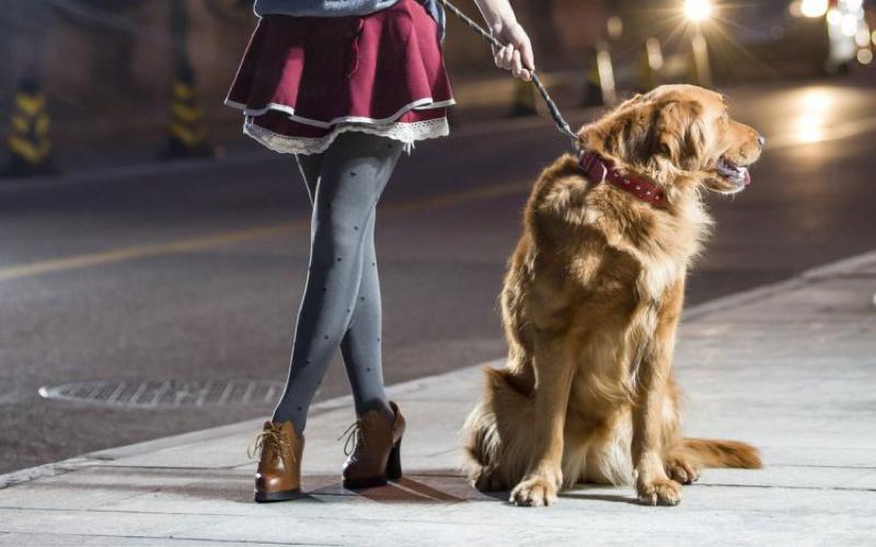 犬の散歩しながらおすすめの曲&映画の話