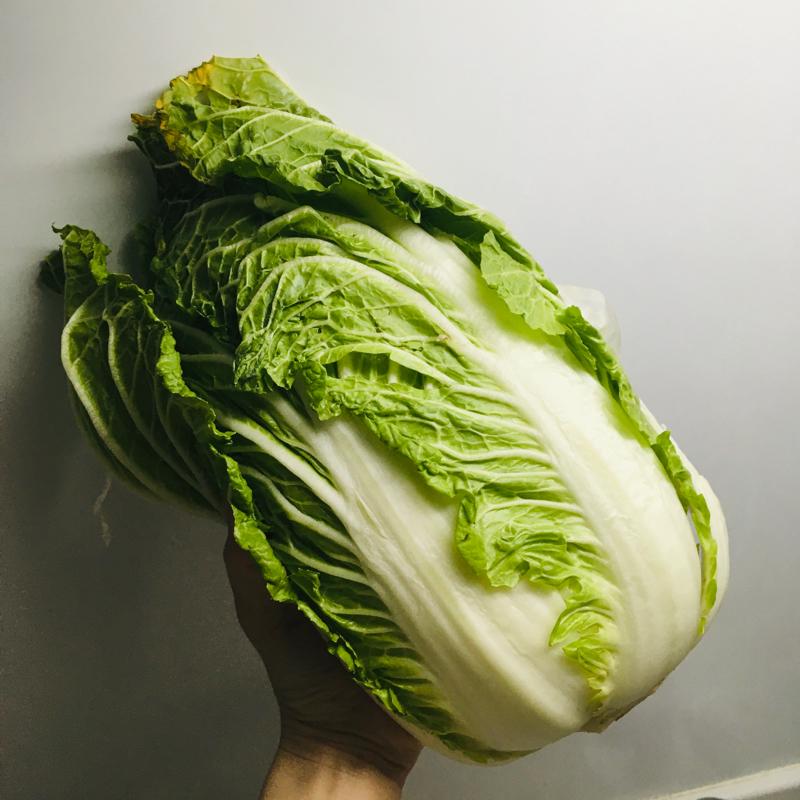 #3 白菜を刻みながら、最近の眩しい気づきを。