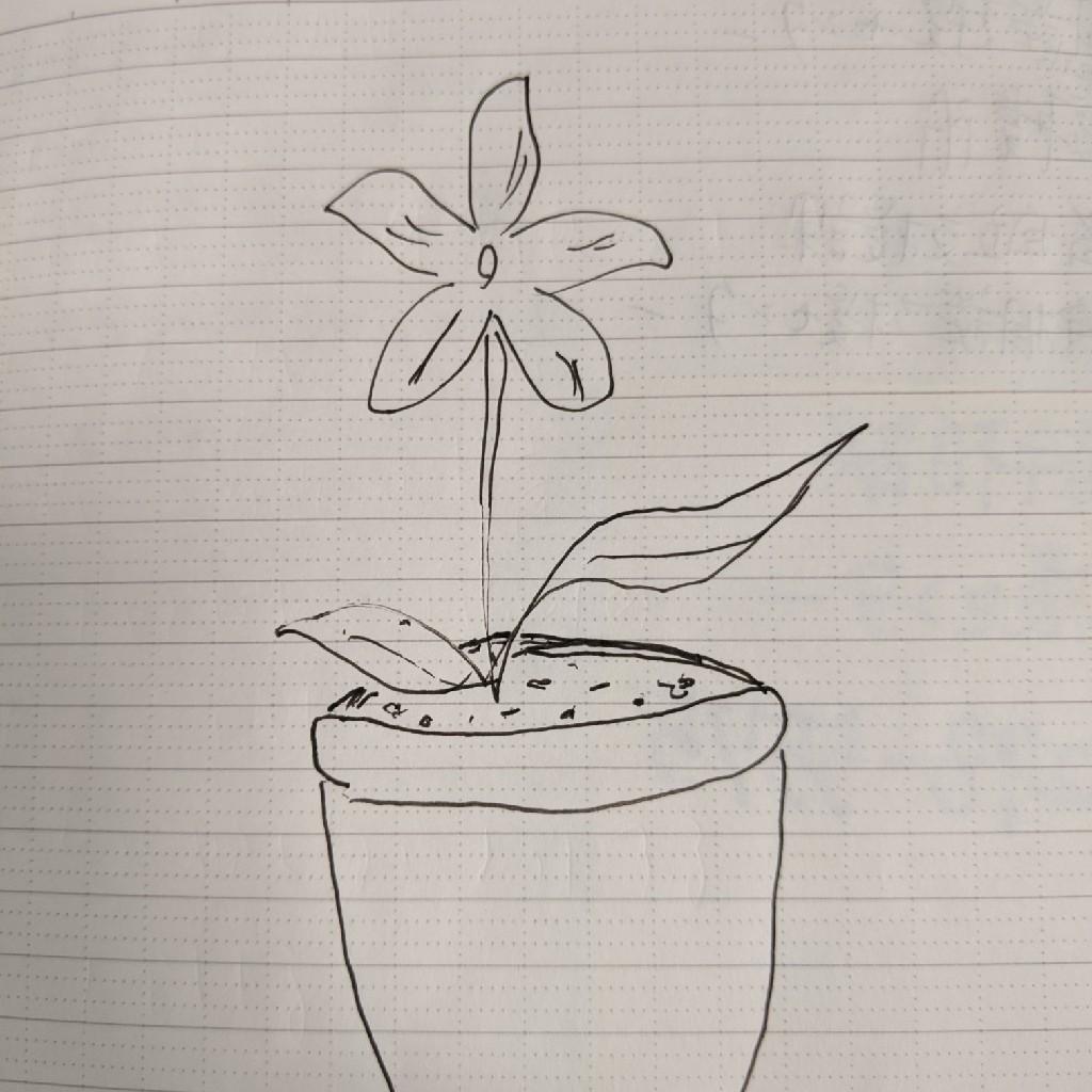 世界に一つだけの花🌺