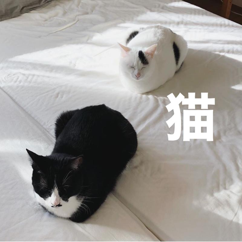 #144 やっぱり猫ですね。
