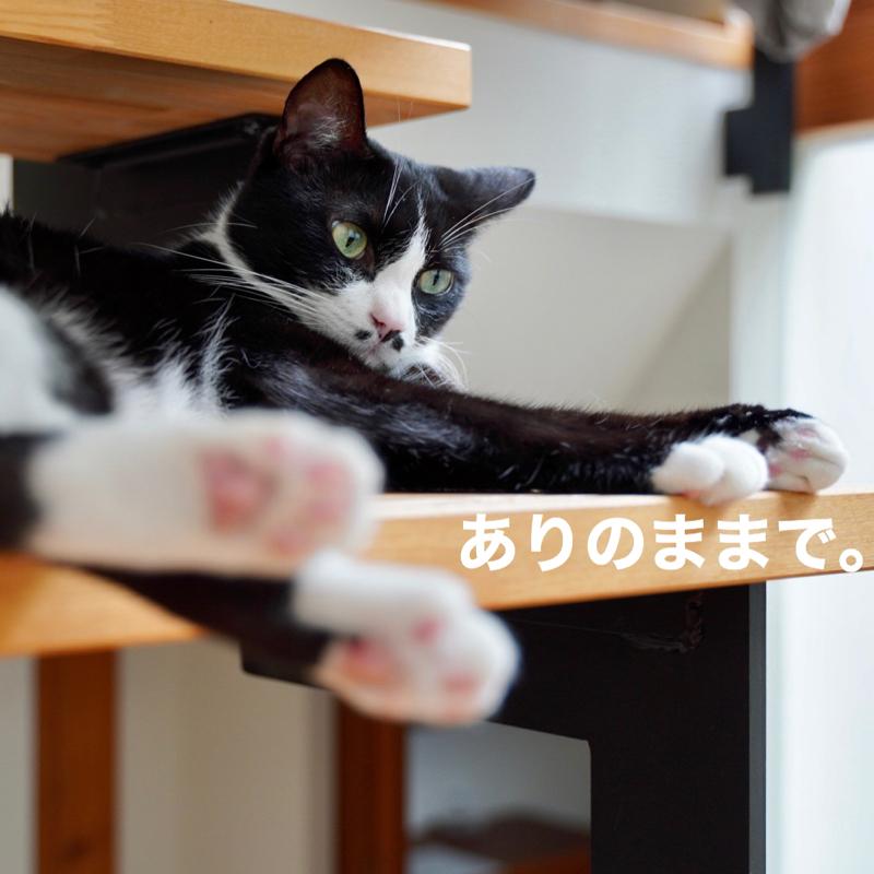 #258 ありのままの〜♪