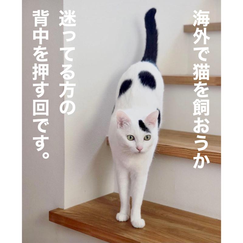 #306 猫のかわいいと癒し効果は万国共通