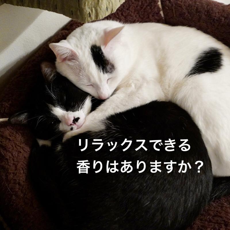 #378 ホワイトティーの練り香水と、猫の匂い、そしてアラフィフおじさんは無味無臭を目指す。