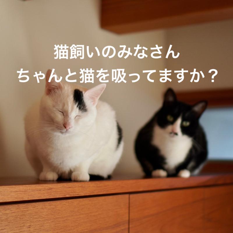 #380 猫飼いのみなさん、ちゃんと猫を吸ってますか〜?