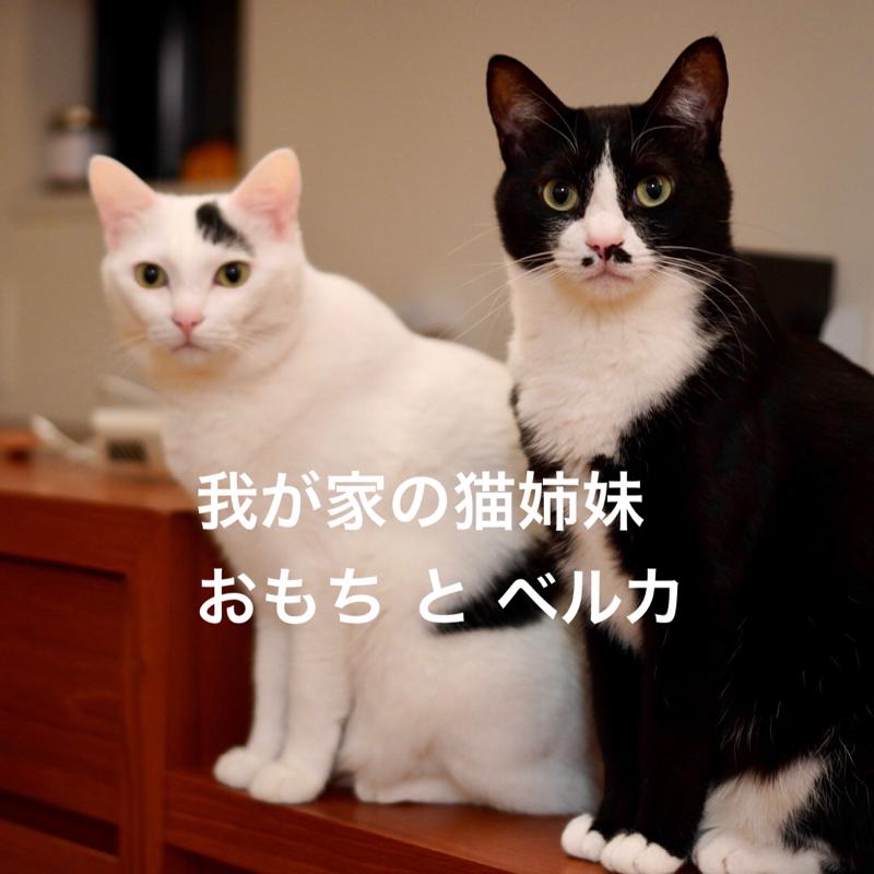 #459 我が家の猫姉妹『おもちとベルカ』のはなし。