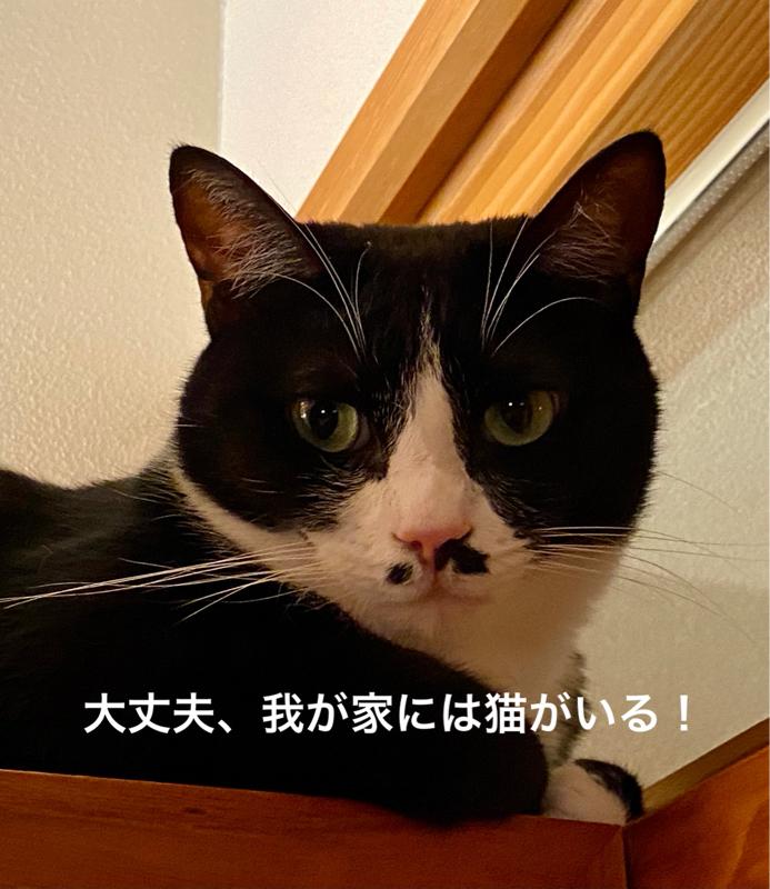 #582 自己肯定感が低い人は、そもそも理想が高すぎます。とにかく猫を飼いましょう。