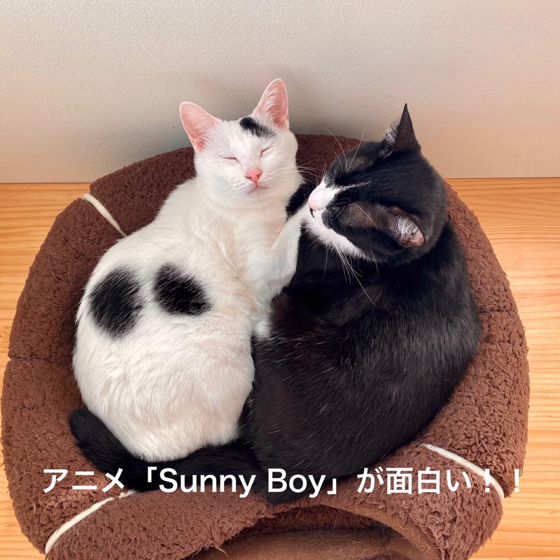 #666 アニメ「Sunny boy」が面白い〜!!