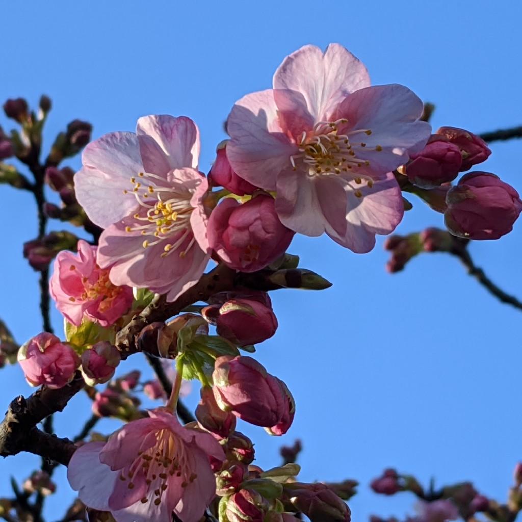 ♥️冬から春へ/あなたの花が開くとき