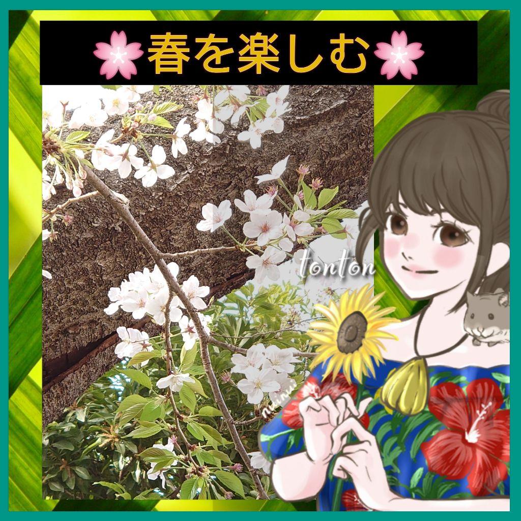 #297🔶「葉桜の夢」/🌸ソメイヨシノからのメッセージ