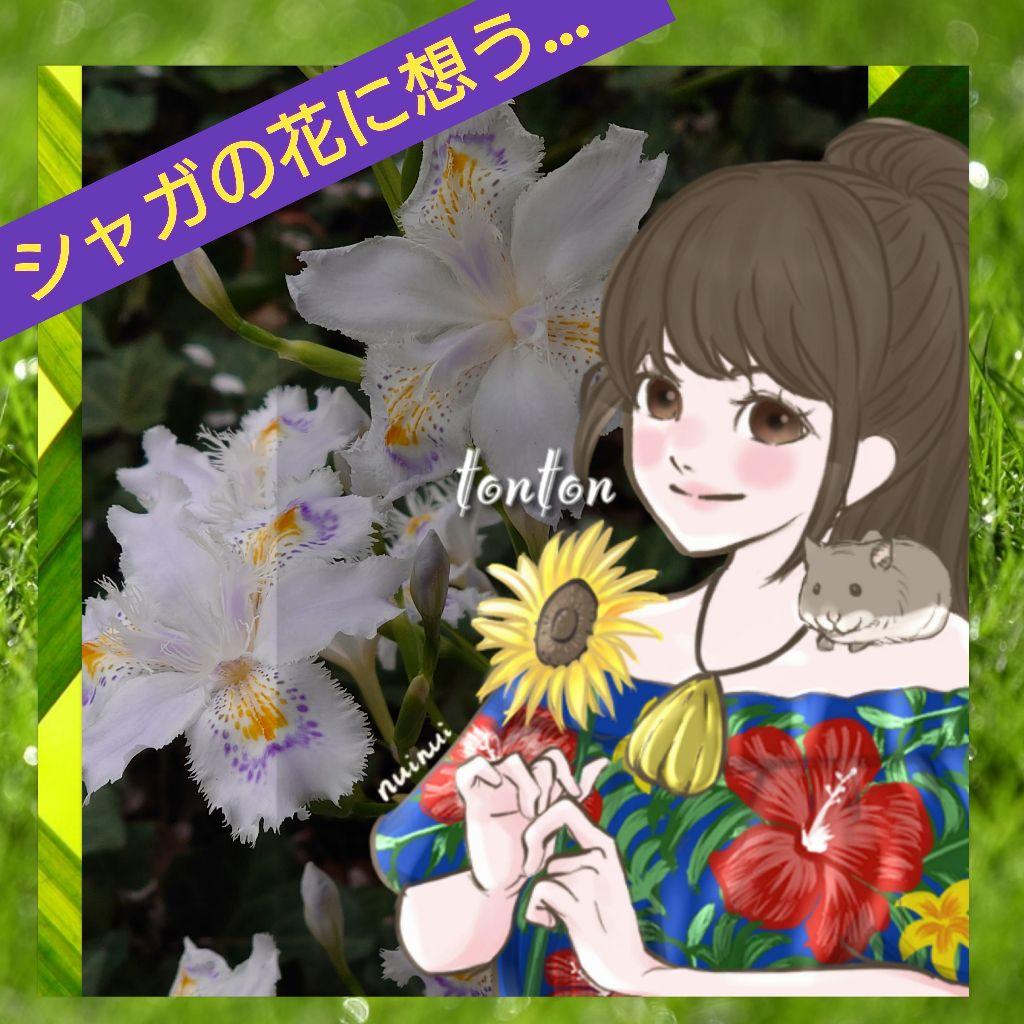 #303🔷我が胸に 艶やかに舞う 著莪の花(by井上まどか)