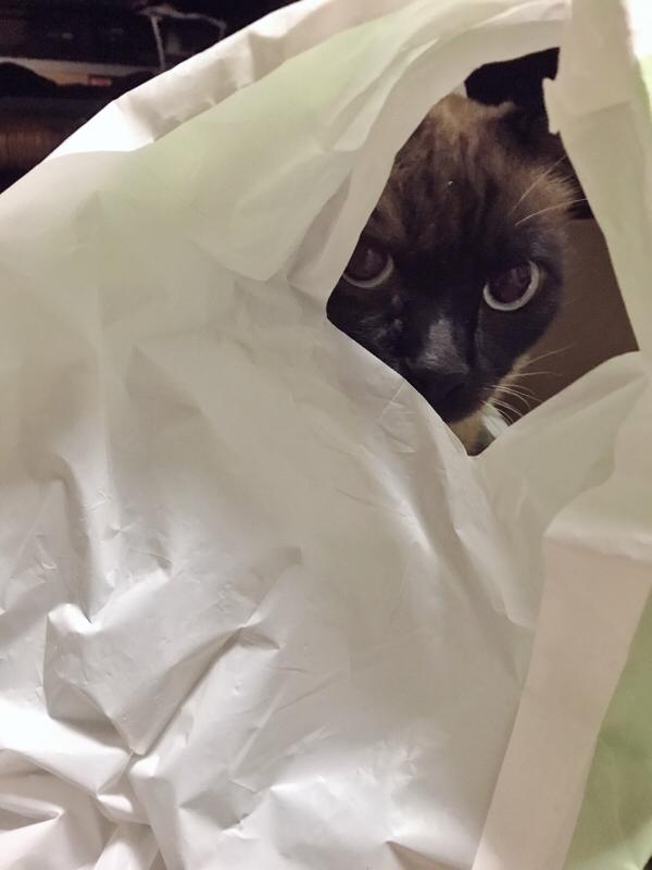 猫に介護される女