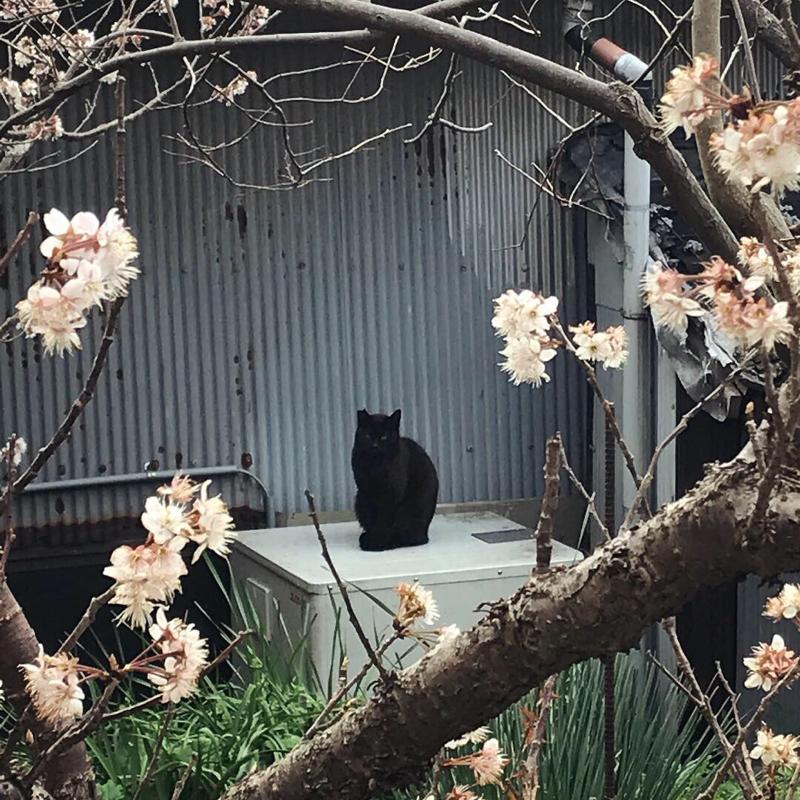 春の隣に猫がいる
