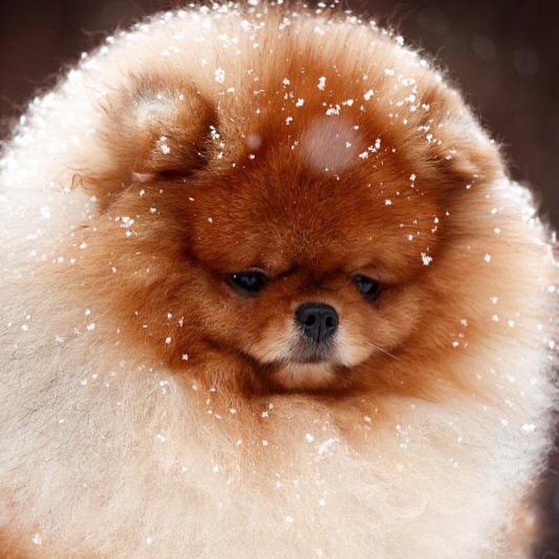 なりたい動物について語り合う~モフモフ犬になりたい欲望を解き明かす~