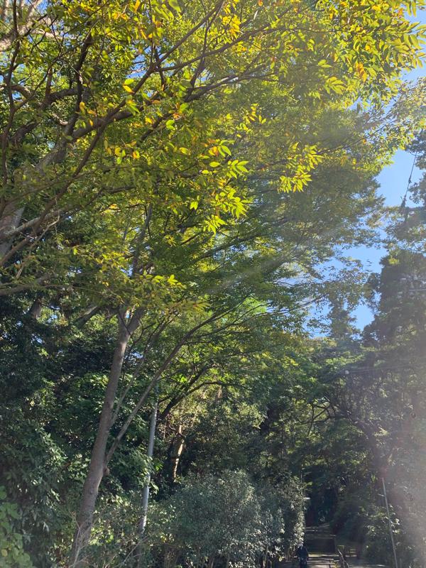 梅澤アンナの大正浪漫お喋り喫茶#094  鎌倉で秋の彩りを見つけよう