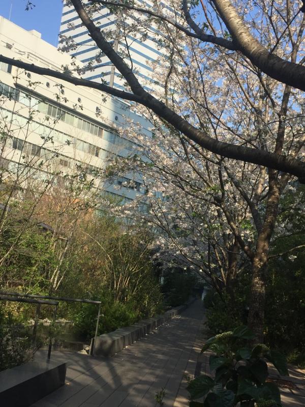 自分について8 深夜のぐたぐたトーク4 桜は綺麗ですね。というお話?