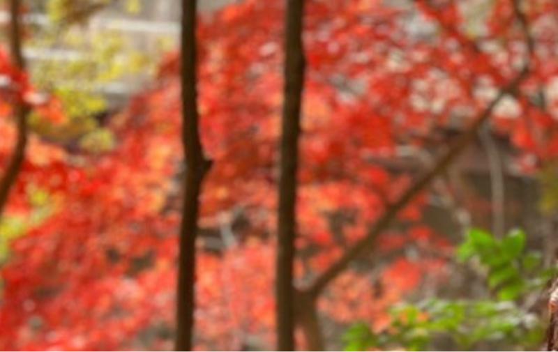 なんちゃらの秋とか別に他に季節でもできることばっかりやんけ