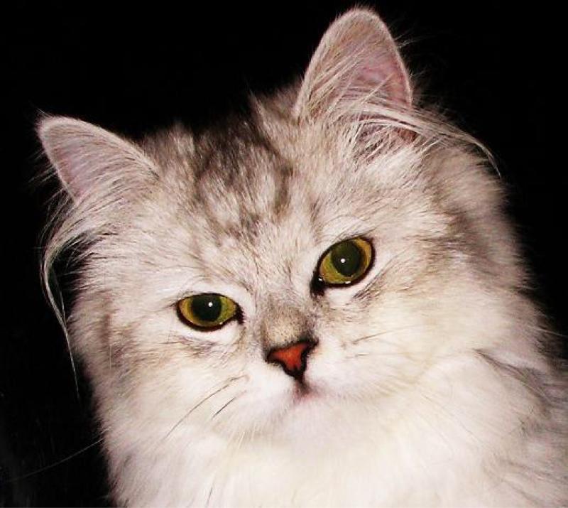 猫のゴロゴロ音と、今、不安を感じている方へ