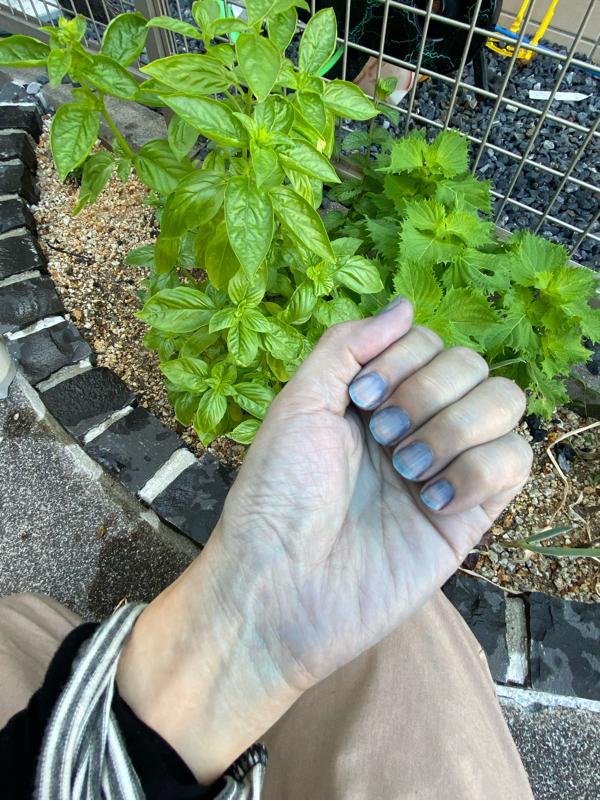 VOL 121 藍の生葉染めをしたよ