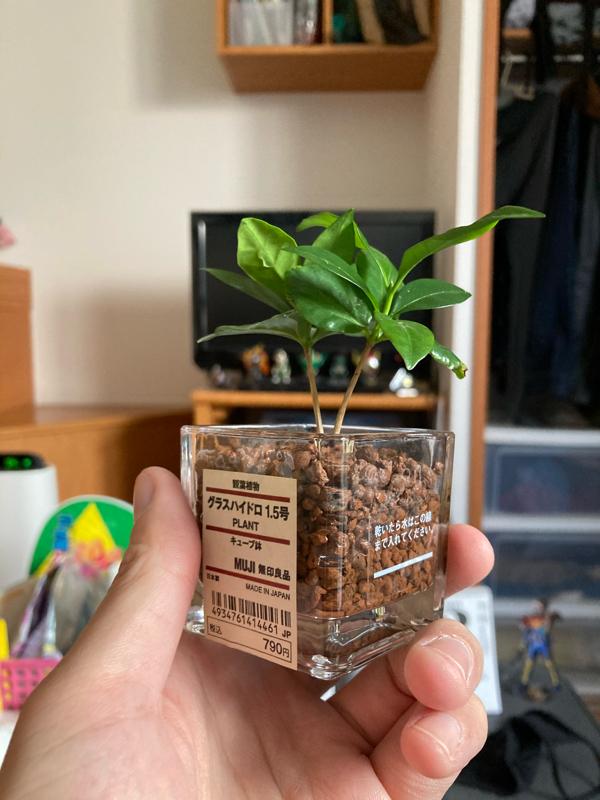 #341 28歳独身男性、観葉植物を買う