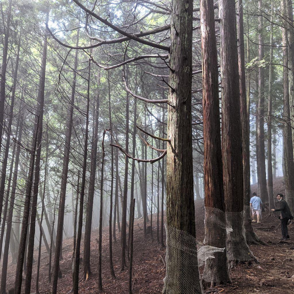 【メモ】秩父三峯神社、奥の宮へ山道を歩く