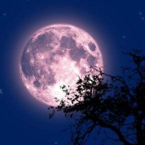 いちごの満月