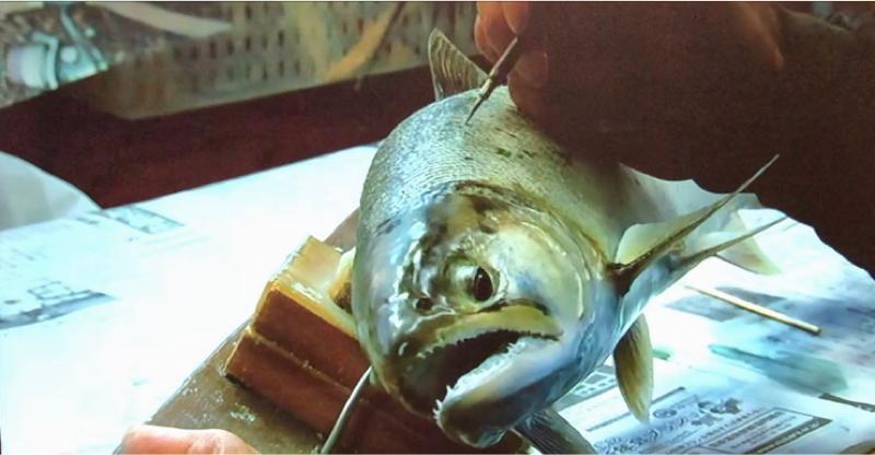 魚の剥製職人