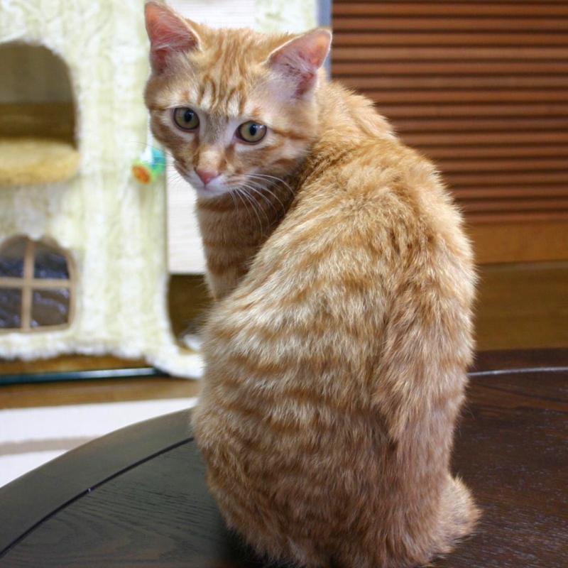 #5 ネコの話 猫が初めて来た日