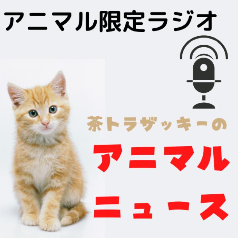 #200 茶トラ猫ザッキー(仮)のアニマニュース