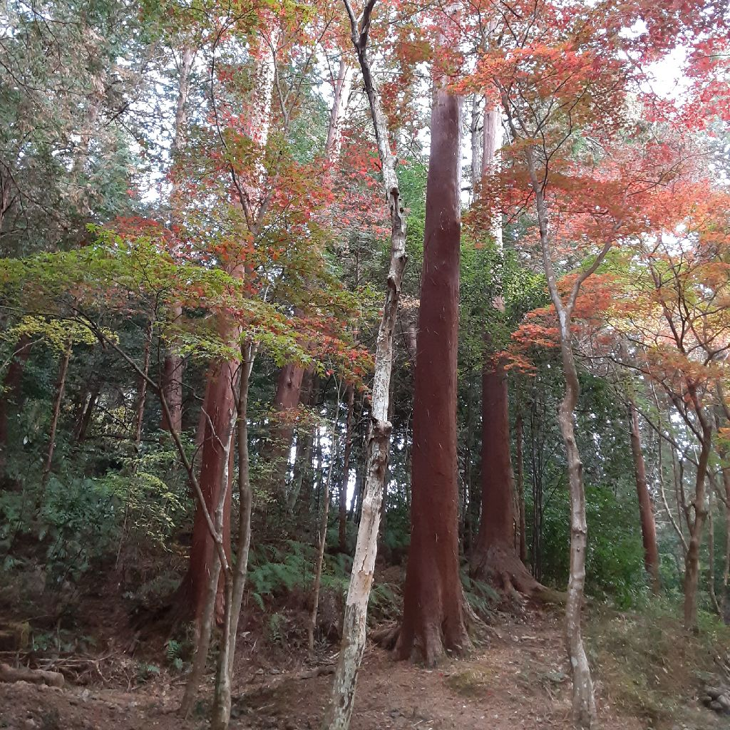 No.168 小国神社 / ひわだぶき / 樹皮の話