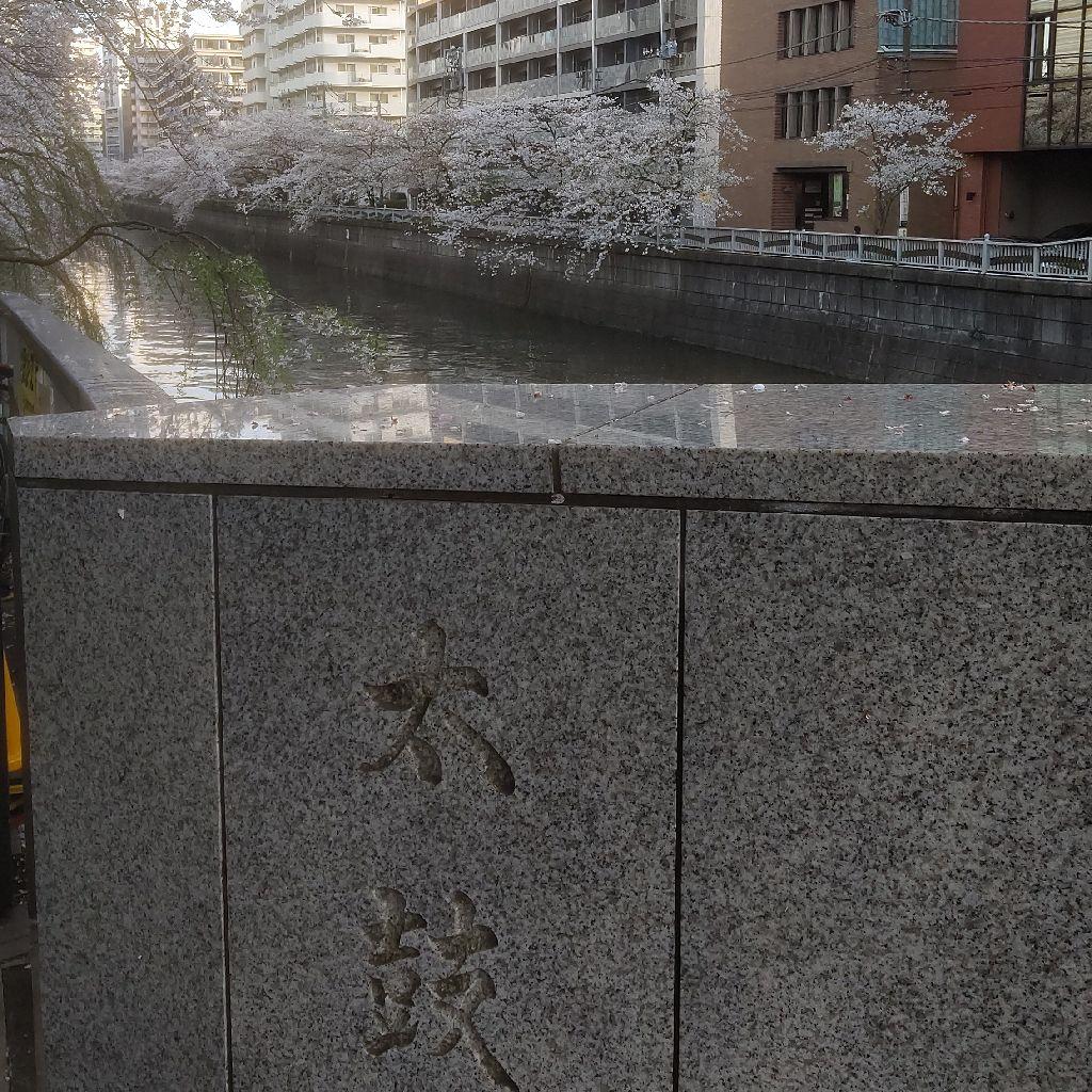 #206『目黒川慕情』