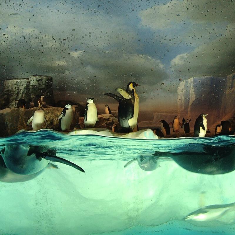 #005 水族館とペンギン