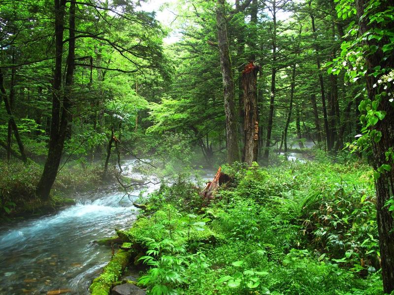森林浴したい気分のときに聞いてほしい