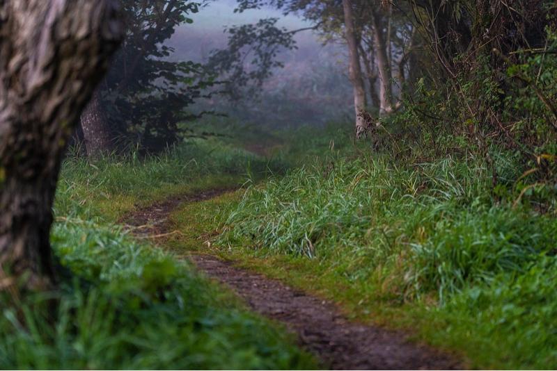 夜の森を歩きたい気分のときに聞いてほしい