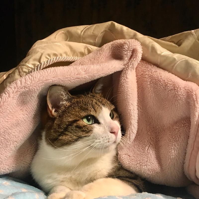 猫のぴーちゃんの事③~手術からの復活