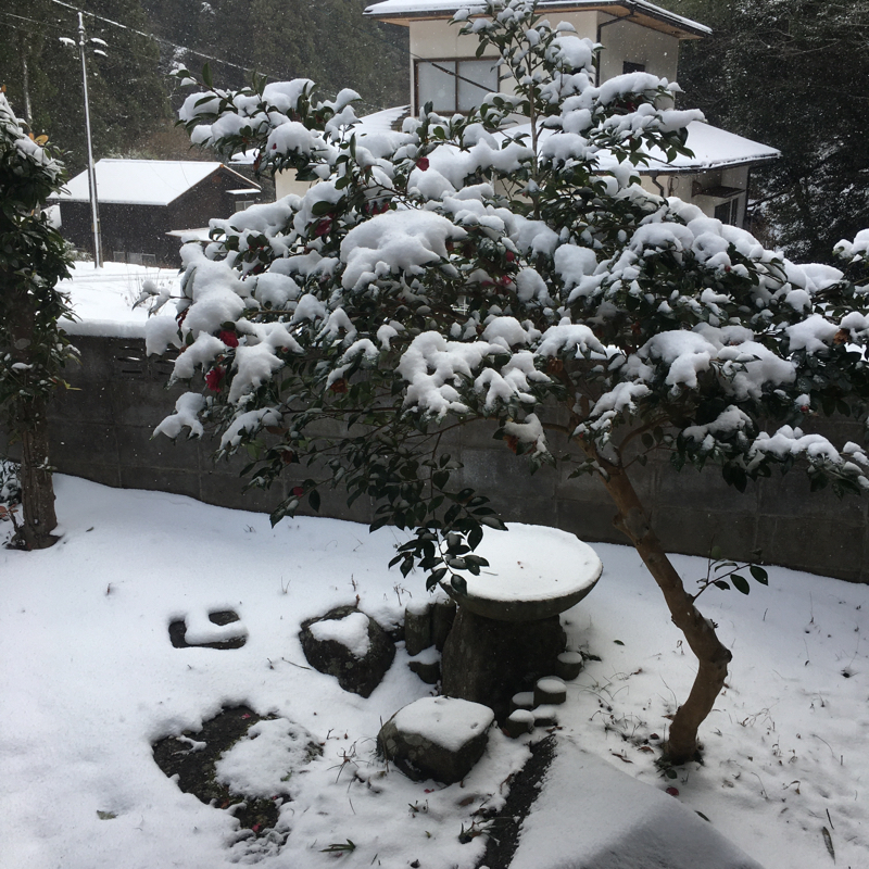 ことよろで大雪❄☃