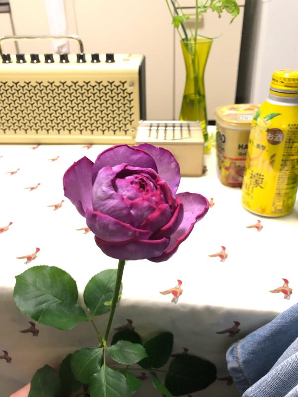 ZOOM飲み+中島らも+花すけさん+お花よ、ありがとう