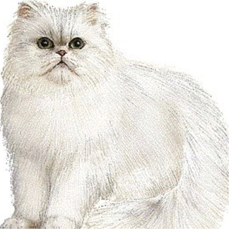 #15 猫が好きすぎて話せるようになったハナシ